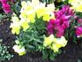 Еще одни цветочки
