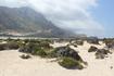 белый песок и  зелёные кусты,похожие на  водоросли.