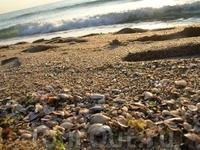 Ракушки на пляже.