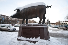 Улыбающаяся свинья около здания рынка. Хрюшка уже размечена, названия частей подписаны внизу. Жутковатый памятник.