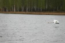 Городищенское озеро  Небольшое (длина - 0,5 км, ширина - 0,25 км, протяженность береговой линии - 1,4 км) и неглубокое (средняя глубина - 3 м, а максимальная ...