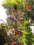 Цветущий уголок