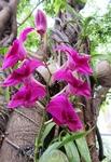 Орхидеи растут прямо на деревьях