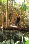 в банановых зарослях на берегу Розового озера (на переднем плане водоёмчик с рыбой - вода пресная, рядом бьют ключи, а само озеро находится чуть левее