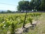 Виноградники в другую сторону