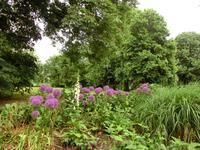 Море зелени и цветов - это Гайд-парк летом.