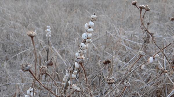 """Ракушечник на выжженной траве - привычная картина, характерная не только для Кипра - """"суровая южная природа"""" :))"""