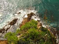 у подножия горы в парке Marimurtra такая красота!