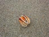 Ракушка была такая живая. что невозможно было не отправить ее обратно в море...