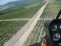 Над виноградными полями на вертолете