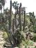 Бланес, ботанический сад