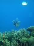 Подводная красота абсерватории...