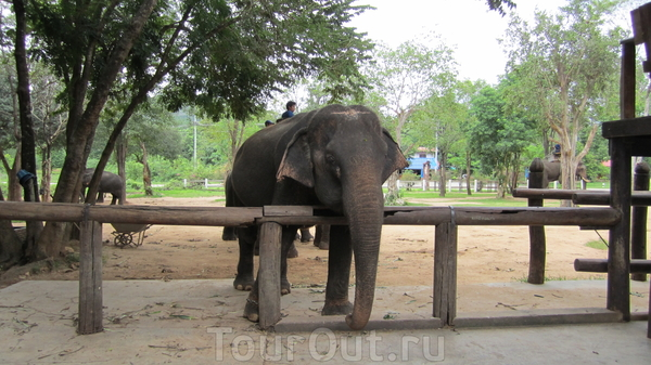 в деревне слонов