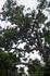 Бали/ на дереве висят летучие лисицы