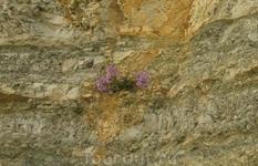 и на скалах растут цветочки...