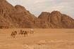 Караваны....   Нам очень повезло с группой: фактически, она состояла... из нас четверых + гида. Не советую ездить в пустыню с большими группами. Несмотря ...
