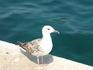 Ровинь. фотоохота на альбатросов