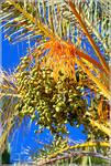 цветы пальмовые