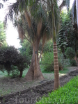 ботанический остров