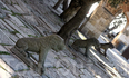 Львы тоже охраняют дворец и город