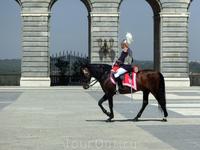 Ну красавцы ведь, что конь, что наездник.