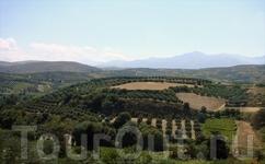 Бескрайние сады оливок и винограда - это всё территория завода, которая обьединяет несколько селений.