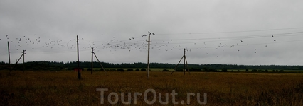 Птицы на проводах около деревни