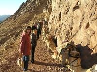 Верблюды выложили путь
