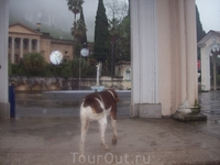 Дождливым утром в Гаграх