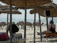 Иногда по пляжу катают на верблюдах. Хорошо, до территории нашего отеля не дошли...
