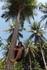 остров Racha (Raya). осваиваем пальмолазание)