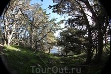 Заповедный лес в Пойнт Лобос
