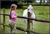 Голландцы, как известно, самая высокая нация в мире. А вот рабочие лошадки у них какие-то маленькие. И не пони вроде. Впрочем со скаковыми лошадями у них ...