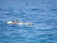 Бухта дельфинов с непосредственными обитателями. Пришлось немного покричать, чтоб приплыли...не всем туристам улыбается удача...