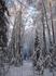 Все, пора в обратный путь. Сегодня, 2 декабря 2007г. - выборы в Государственную Думу. Мой напарник - руководитель местного лесхоза, ему нужно успеть проконтролировать ...