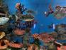 В каждом аквариуме создается свой микроклимат.