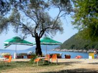 пляж Жанице. оливковая роща