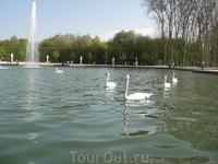 Лебеди в Версале