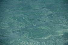 пляж Сирена, рыбки так и вьются вокруг ног