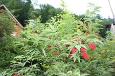 неизвестное мне растение, но красивое =)