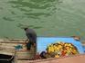 Фруктовый  киоск на воде, везде в таких лодках почему-то встречались поидоры