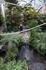 В центральной части сада расположились растения тропиков и фонтан с рыбками.