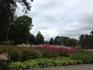 цветы в одном из парков Сигулды