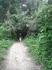 В тьму джунглей