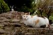 Другой кот в парке около Святой Софии