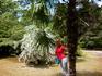 На протяжении всего пребывания в Большом Сочи любовалась пальмами и чуть ли не под каждой фотографировалась.Адлер.Курортный поселок