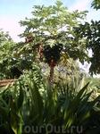 Паттайя (сентябрь 2006)