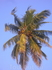 В ГОА очень много пальм ,соответственно риск получить по тыкве кокосом очень велик