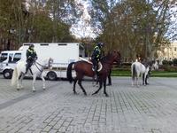 И снова конная полиция. Лошадок привозят в специальных фургонах, а полицейские оказались милыми девушками. Лошадки не только спокойно относятся к гуляющей ...