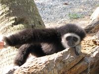 Самуи. Животных лучше не трогать. обезьянки милые, но кусаются. лично видила, ребенка в клинику возили, кожу прокусила.